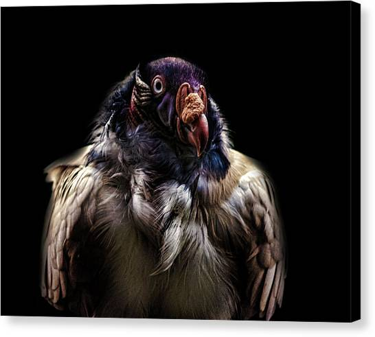 Griffons Canvas Print - Bad Birdy by Martin Newman
