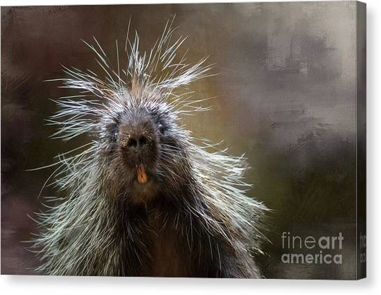 Bad Hairday Canvas Print