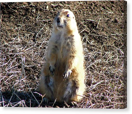 Badlands Prarie Dog Canvas Print by Dave Clark