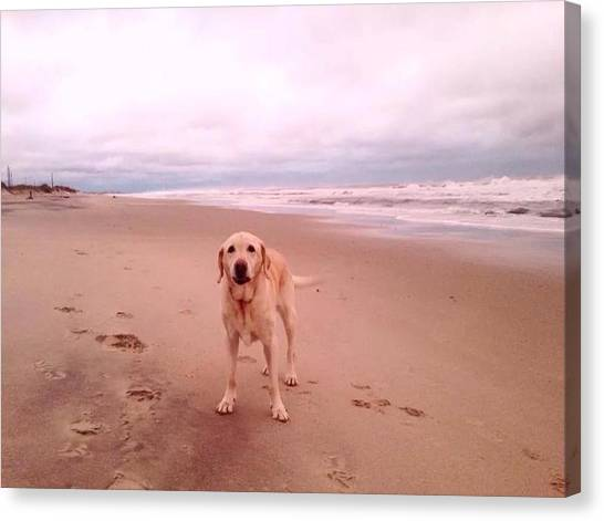 Yellow Lab Canvas Print - Bailey's Beach by Laura Henry