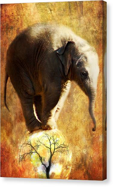 Balance Canvas Print by Trudi Simmonds