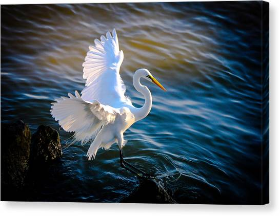 Balancing Act  Great White Egret  Canvas Print