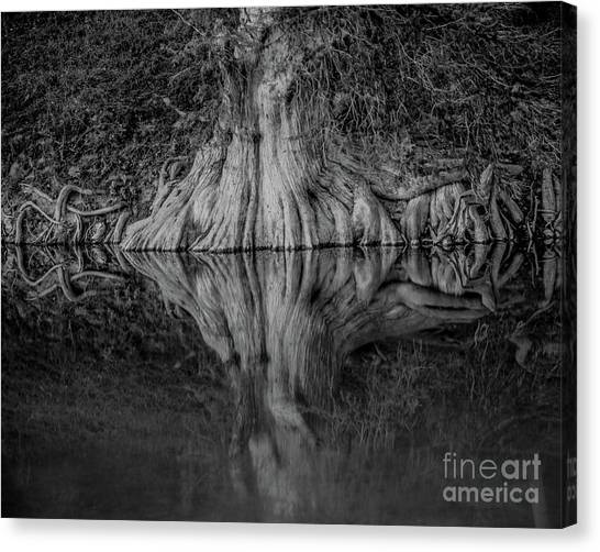 Bald Cypress Reflection In Black And White Canvas Print