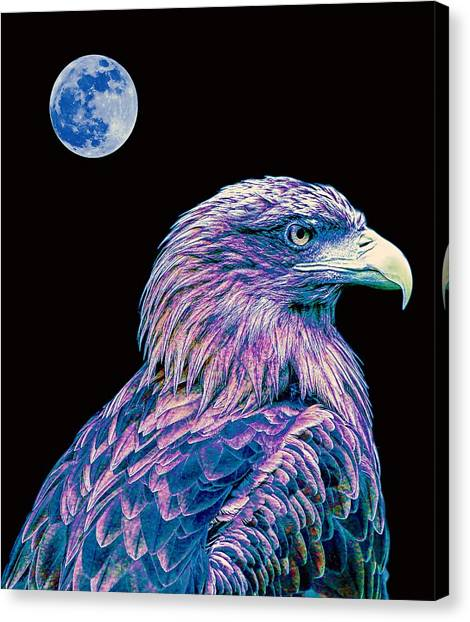 Eagle Scout Canvas Print - Bald Eagle  2 by Celestial Images