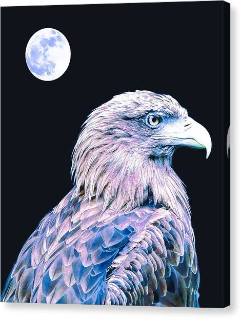 Eagle Scout Canvas Print - Bald Eagle 3 by Celestial Images