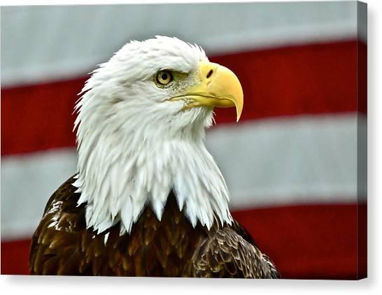 Bald Eagle And Old Glory Canvas Print