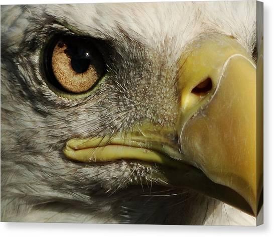 Bald Eagle Eye Canvas Print