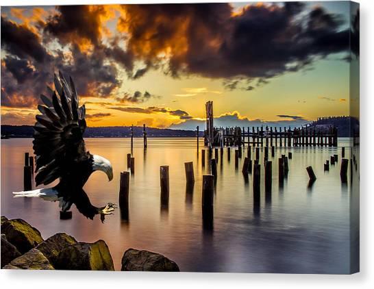 Bald Eagle Landing At Beach As Sun Sets Canvas Print