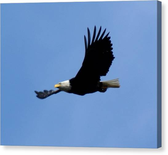 Canvas Print featuring the photograph Bald Eagle Soaring High by Ben Upham III
