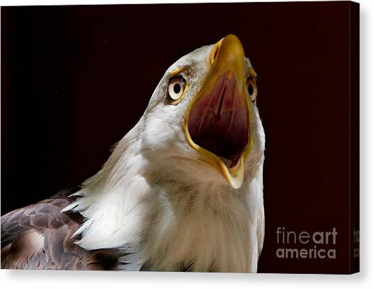 Bald Eagle - The Great Call Canvas Print