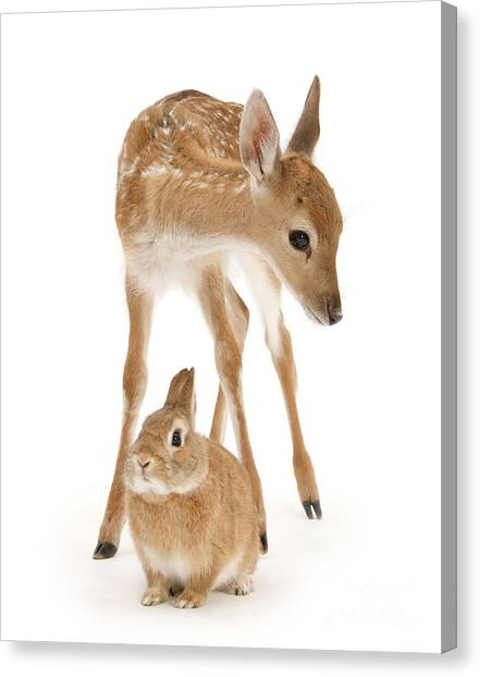 Bambi And Thumper Canvas Print