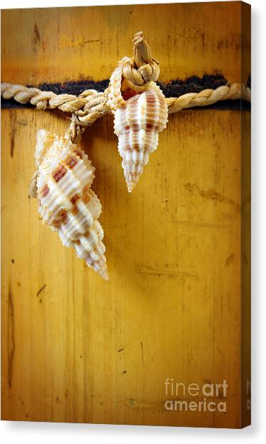Bamboo Canvas Print - Bamboo And Conches by Carlos Caetano