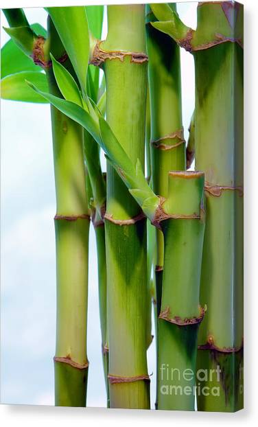 Bamboo Canvas Print - Bamboo And Sky by Olivier Le Queinec