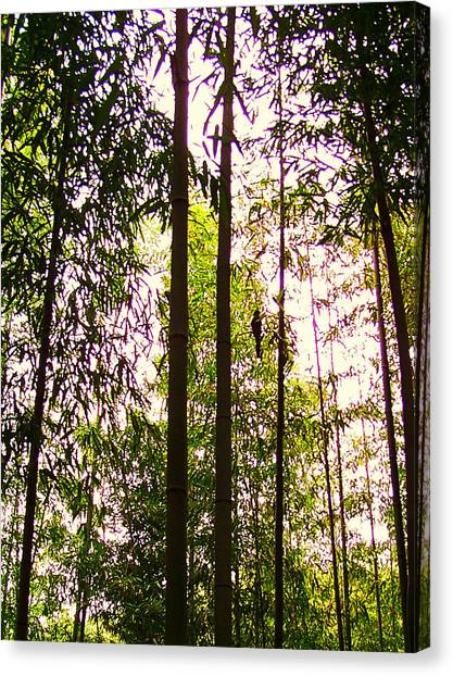 Bamboo And The Cuckoo Canvas Print by Michael C Crane