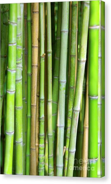 Bamboo Canvas Print - Bamboo Background by Carlos Caetano