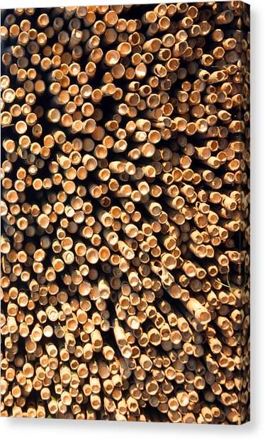 Bamboo Days Canvas Print by Jez C Self