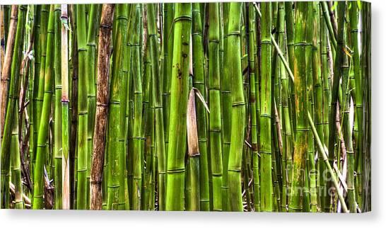 Bamboo Canvas Print - Bamboo by Dustin K Ryan