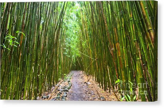 Bamboo Canvas Print - Bamboo Forest Trail Hana Maui 2 by Dustin K Ryan
