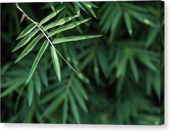 Bamboo Leaves Background Canvas Print