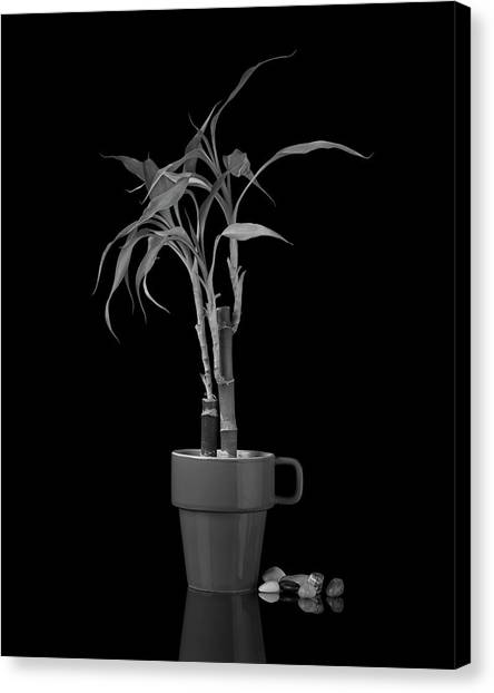 Coffee Plant Canvas Print - Bamboo Plant by Tom Mc Nemar