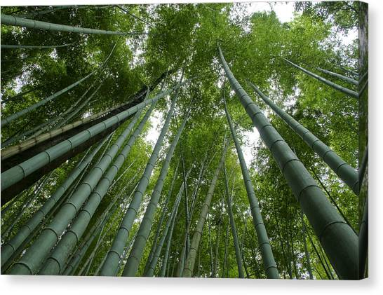 Sagano Bamboo Forest Canvas Print - Bamboo To The Sky by Brian Kamprath