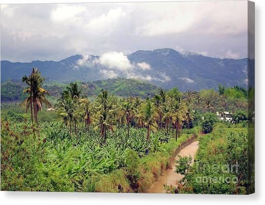 Banana Tree Canvas Print - Banana And Palm Trees In Southern Taiwan by Yali Shi