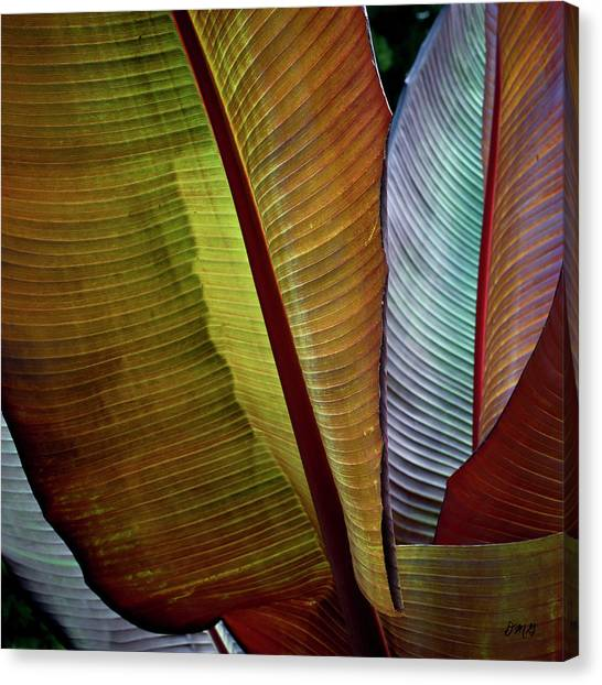 Banana Tree Canvas Print - Banana Plant Leaves I Color by David Gordon