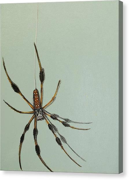 Banana Spider Canvas Print