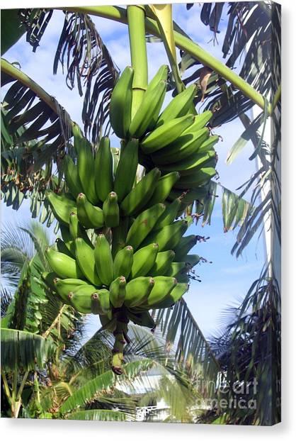Banana Tree Canvas Print - Banana Tree by Toni  Thorne