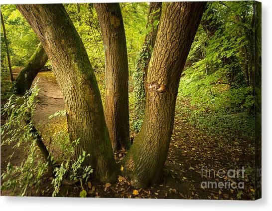 Autumn Leaves Canvas Print - Band Of Brothers by Smart Aviation