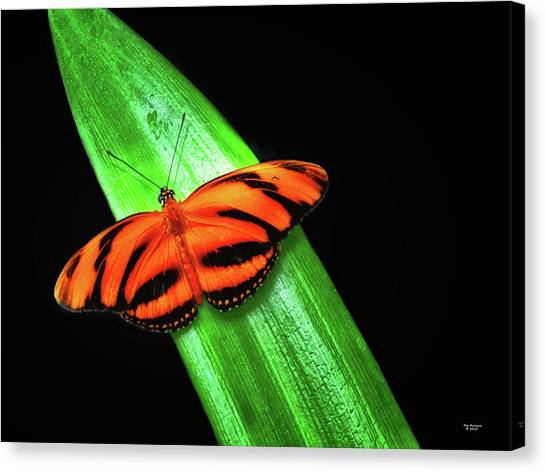 Canvas Print - Banded Orange Longwing by Peg Runyan