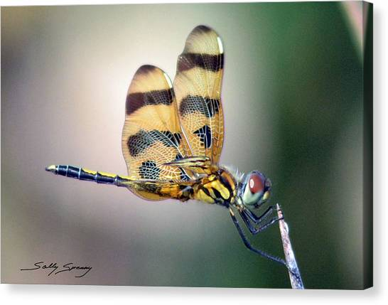 Banded Pennant Canvas Print