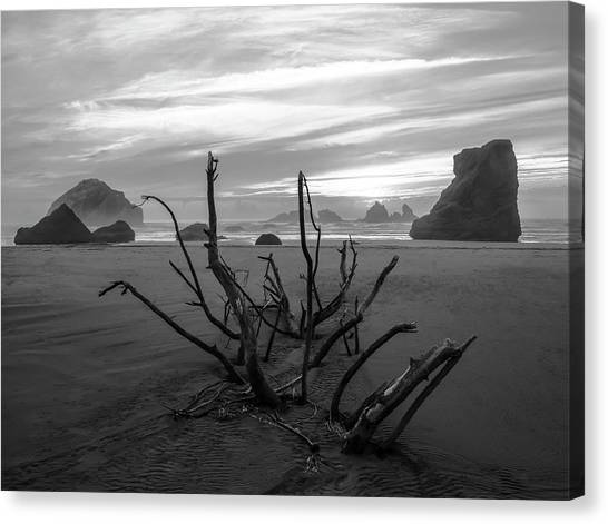 Bandon Beach Tree Canvas Print