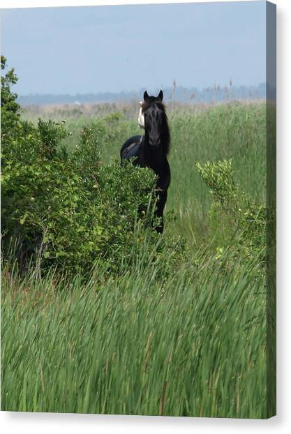 Banker Horse And Egret - Portrait Canvas Print