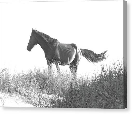 Banker Horse On Dune  1 Canvas Print