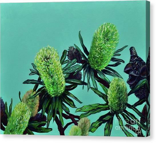 Banksias Canvas Print