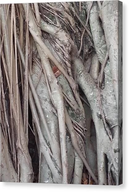 Banyan In Maui Canvas Print