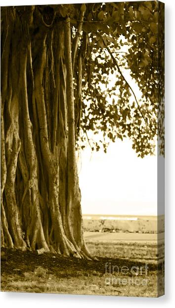 Surf Lifestyle Canvas Print - Banyan Surfer - Triptych  Part 2 Of 3 by Sean Davey