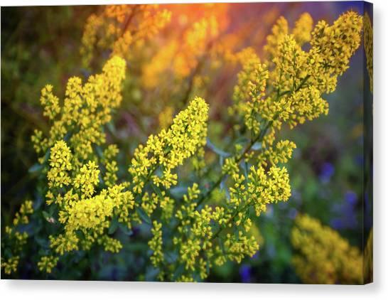 The Nature Center Canvas Print - Barbarea Vulgaris - Yellow Rocket  Garden Flower by Jennifer Rondinelli Reilly - Fine Art Photography