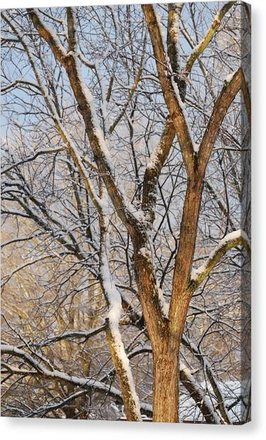 Bare Branches Canvas Print by Trudi Southerland