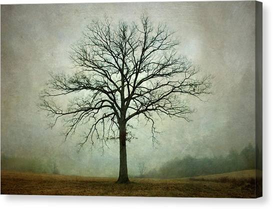 Bare Tree And Fog Canvas Print