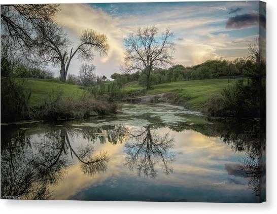 Bare Tree Reflections Canvas Print