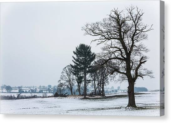 Bare Trees In The Snow Canvas Print