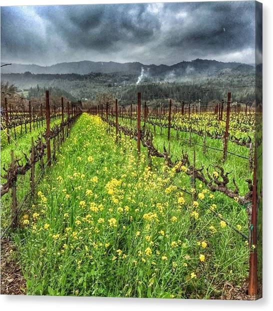 Winery Canvas Print - Napa by Nancy Ingersoll