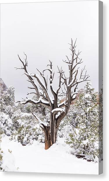Bark And White Canvas Print