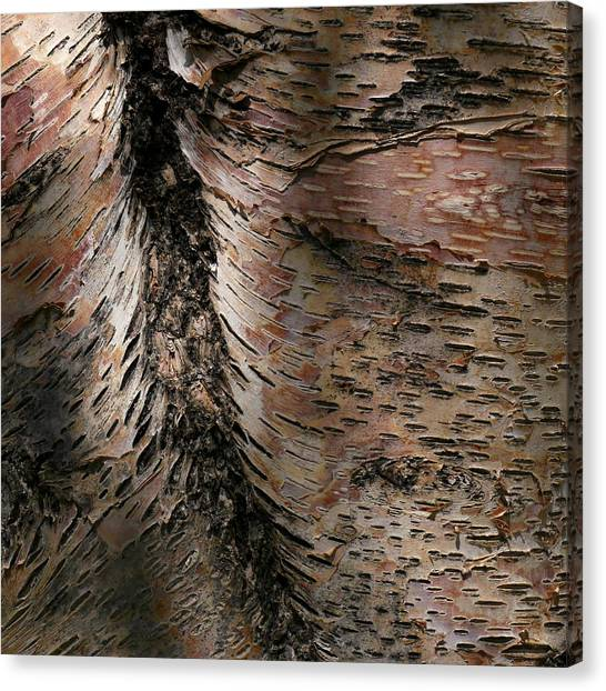 Canvas Print featuring the photograph Bark At Woodstream Village by Dutch Bieber