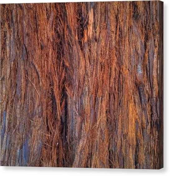 Shaggy Bark Canvas Print