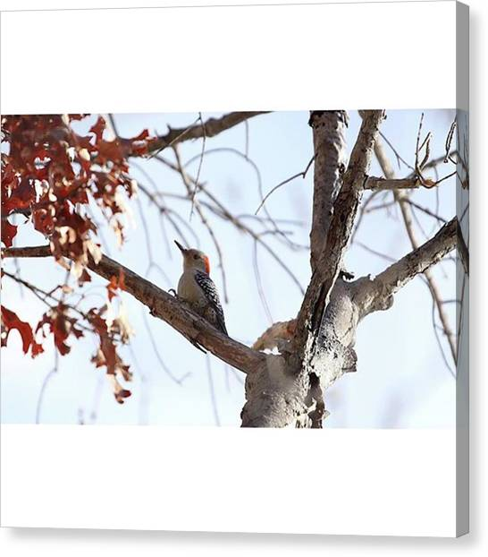 Woodpeckers Canvas Print - Bark Was Falling Down On Me As I Sat by Bryan Edwards