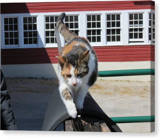 Donkeys Canvas Print - Barn Cat by Laura Henry