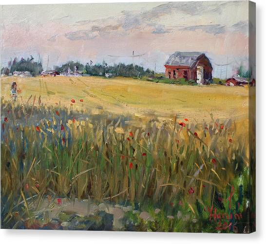 Georgetown University Canvas Print - Barn In A Field Of Grain by Ylli Haruni